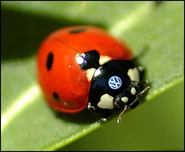 Coccinelle by Acanthe modified by Blogautomobile