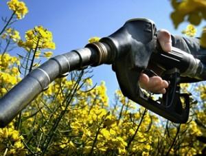 biocarburants-300x227