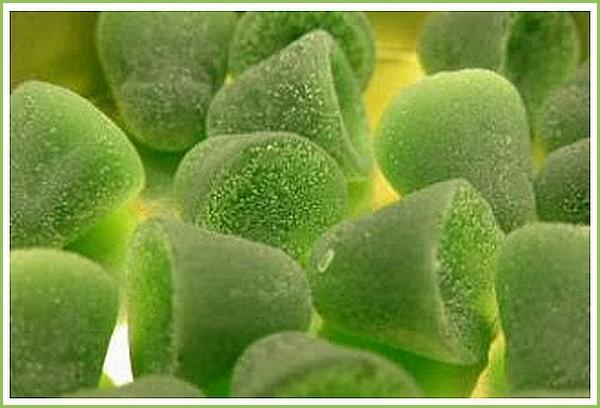 2014 - le retour de la pastille verte
